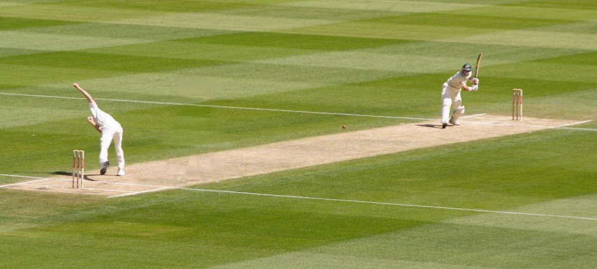 cricket-picture