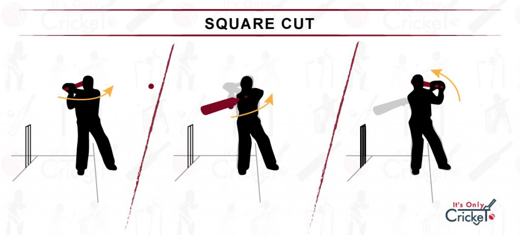 How to Play Square Cut Shot in Cricket