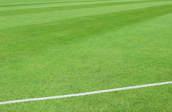 Line-Cricket